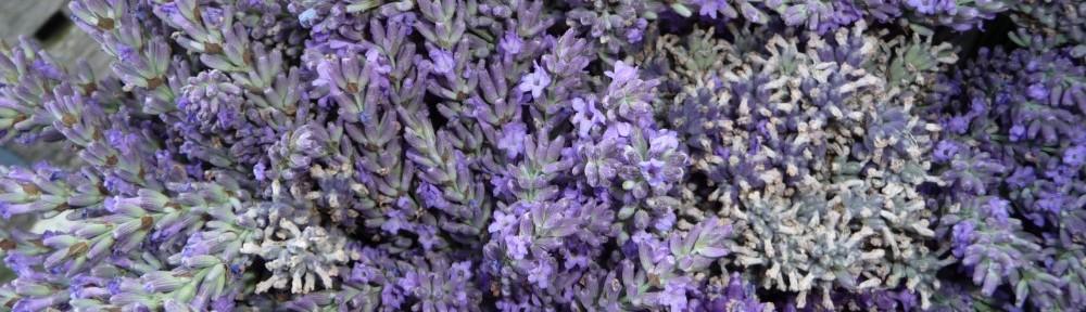 cropped-Lavendel-2.jpg